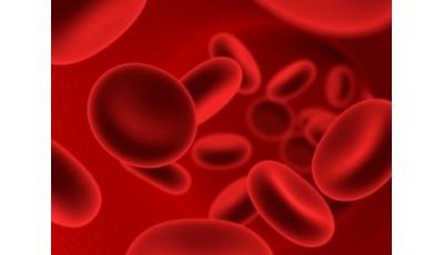 Физиология крови. Клетки крови