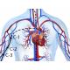 Канал Сердца, диагностика и методы воздействия
