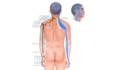 Канал Тонкой кишки, диагностика и методы воздействия