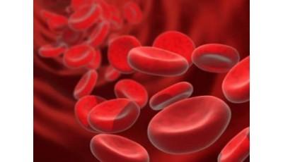 Основы физиологии. Плазма крови