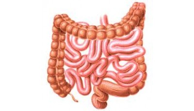 """Оценка функционального состояния органов пищеварения на АПК """"ВедаПульс"""". Пищеварение в тонком кишечнике"""