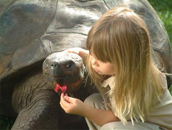 Черепаха Генриетта прожившая 175 лет. Причиной смерти стал сердечный приступ. На протяжении последних 17 лет, которые Генриетта прожила в Австралийском зоопарке, она была там главной знаменитостью. Согласно легенде, черепаха была привезена с Галапагосских
