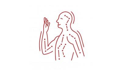 Меридианы (пульс органов)...